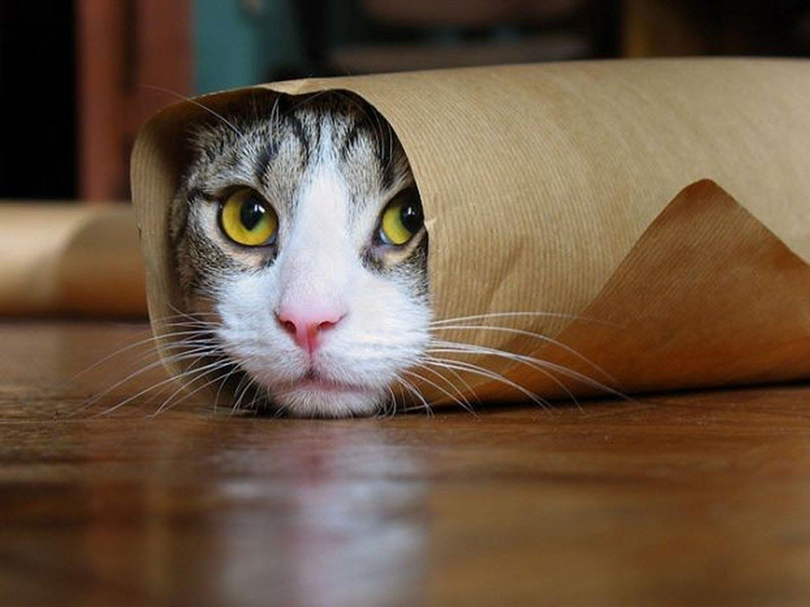 cat_pic_suzan